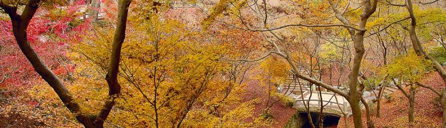 Tofukuji grounds in Autumn. Taken from a photo by Alex Taikei Vesey.