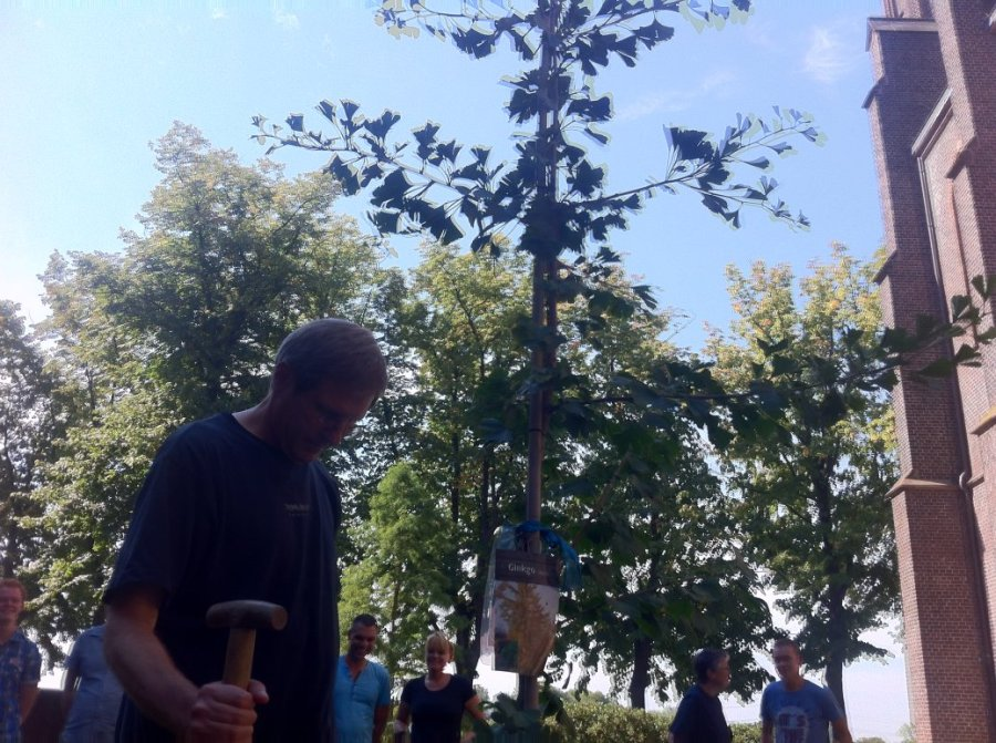 Ginkgo Tree 2013