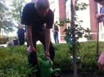 Watering Ginkgo Tree
