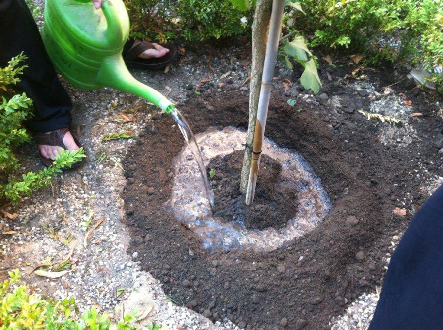 Steyl Tree Planting